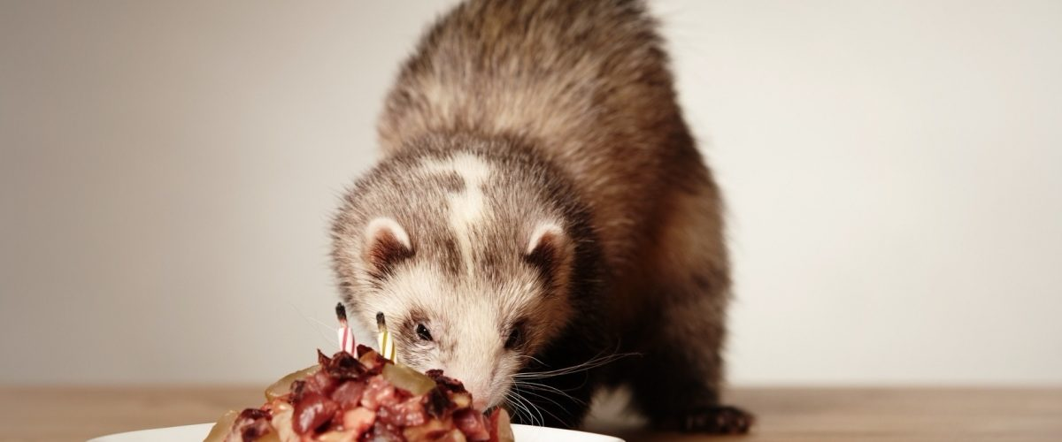 frequence repas furet